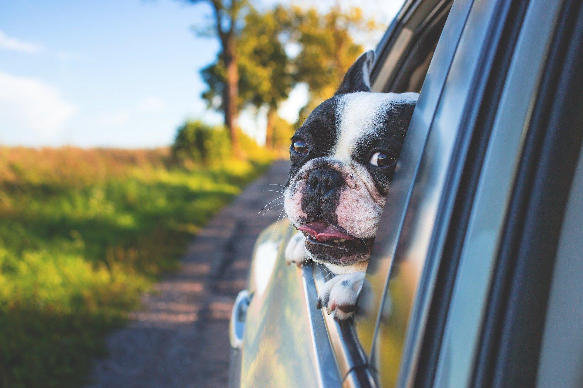 As caixas de transporte para animais são obrigatórias por lei para proteger a segurança dos nossos amigos de quatro patas, de acordo com o Código da Estrada.